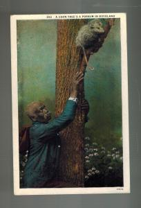 Mint Color Picture Postcard Black Americana Man Treeing Opossum in Dixieland