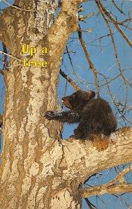 Bear Post Card Up a tree Unused