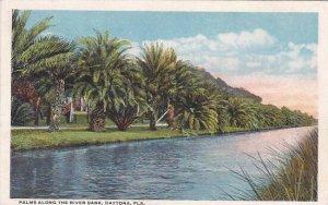Florida Daytona Palms Along The River Bank 1916