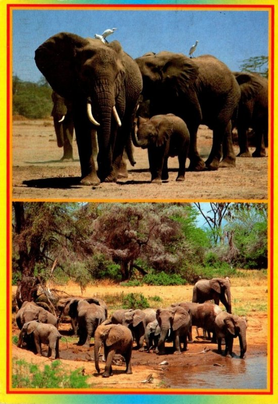 Kenya African Wildlife Elephants