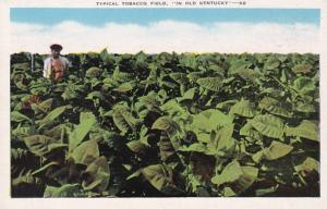Kentucky Typical Tobacco Field