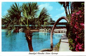 Florida Silver Springs The Horse Shoe Palm
