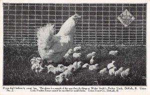 DeKalb Illinois Walter Smith's Poultry Yards Chicken Vintage Postcard AA37763