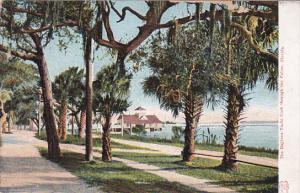 The DAYTONA Yacht Club, through the Palms, Florida, 00-10s