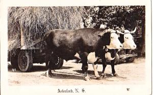 RPPC - Aulesford NS, Ox Team
