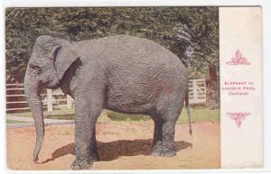 Elephant Lincoln Park Zoo Chicago Illinois 1910c postcard