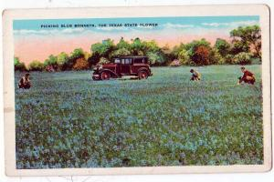 Blue Bonnets, Texas State Flower