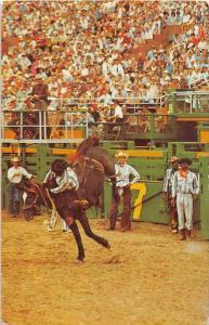 10231   Rodeo bronco Riding Cowboy