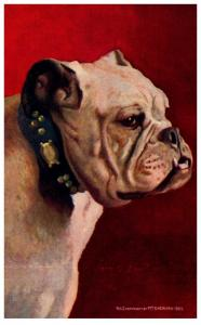 Dog  english Bull Dog , signed M.Y.Sheanan