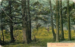 Haverhill Massachusetts~Deer Park In Winnekenni Park~Deer Poses~1911 Postcard