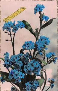 Bonne Annee New Year! Forget-me-Nots Flowers 1950