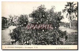 Postcard Old French Sudan a mango tree