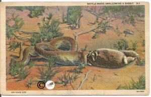Vintage Linen Postcard Rattle Snake Swallowing Rabbit in Desert 1932 Curteich