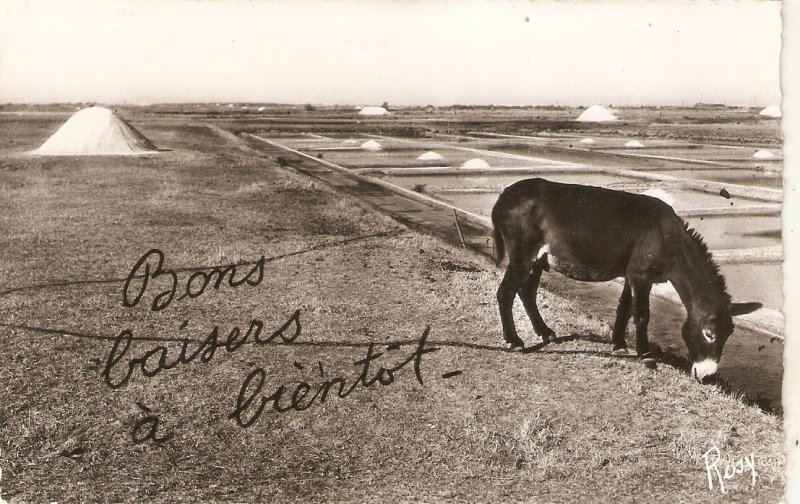 Donkey. Pasturing. Bons baisers a bientot  Old vintage French postcard