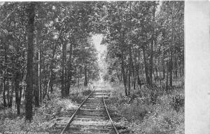 Reading Pennsylvania~Gravity Railroad~Tracks Through Trees~1906 B&W Postcard