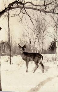 RP; Deer Buck, Winter Rt Iron River, Michigan, 00-10s