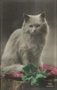 Fluffy White Long-Haired Cat & Ribbon c1910 Tinted Real Photo Postcard 63146/4