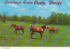 Horses In Pasture Greetings From Ocala Florida