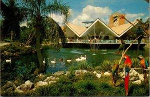 Postcard Hospitality House Busch Gardens Tampa Florida Birds Swan Parrots 1533