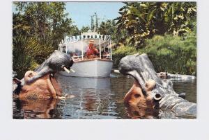 VINTAGE POSTCARD DISNEYLAND ADVENTURELAND HIPPOS OF THE CONGO JUNGLE CRUISE