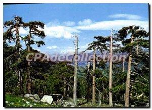 Modern Postcard Corsica Oasis De Beaute Col De Vergio