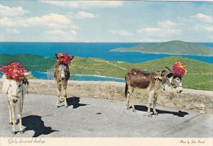 St Thomas Gaily Decorated Donkeys