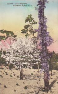 North Carolina Southern Pines Wisteria and Dogwood Handcolored Albertype
