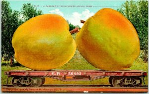 1910s California EXAGGERATION Postcard Carload of BELLFLOWER APPLES Mitchell