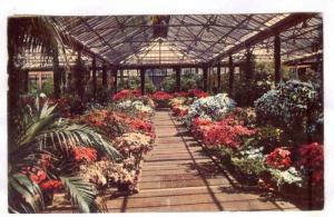 Interior, Beautiful Longwood Gardens, Wilmington, Delaware, PU-40-60s