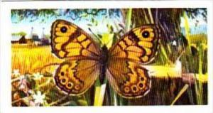Brooke Bond Tea Trade Card British Butterflies No 2 Wall