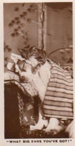 Cat Sleeping on Alsation Dog Ears German Real Photo Cigarette Card
