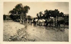 c1920 RPPC Postcard; A Rock Co. Scene, Horses Drinking from Stream Nebraska