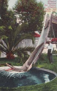 Alligator Shooting the Chutes, Alligator Farm, Los Angeles, California, 1900-10s