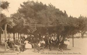 c1910 Corpus Christi Texas Under the salt Cedars Rest relax Group Image Postcard