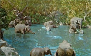 Amusement Disneyland Anaheim California Elephant Bathing Pool Postcard 10798