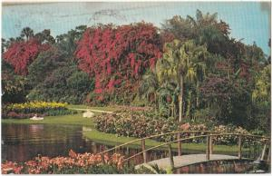 Beautiful flowers, Cypress Gardens, Florida, 1980 used Postcard