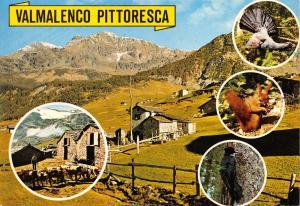 Postcard Valmalenco Pittoresca, Sondrio, Italy #328