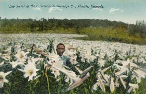 Lily Fields of Outerbridge Florists - Bermuda - DB