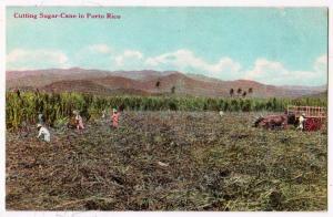 Cutting Sugar-Cane, Porto Rico