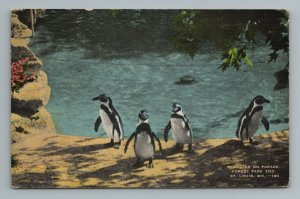 Penguins on Parade Forest Park Zoo St Louis MO Missouri Postcard