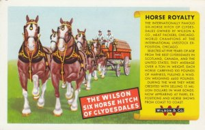 CHICAGO, Illinois; 1910-20s; The Wilson Six Horse Hitch of Clydesdales