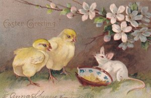 EASTER, PU-1907; Greeting, Chicks watching white mouse by broken dish