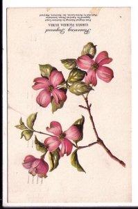 Flowering Dogwood, Cornus Florida Rubra, Used Maine 1958