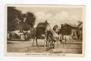 RP, Camels Quenched Thrist, Shielk Othman Aden, Yemen, Asia, 1920-1940s