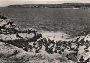 RP; MOSSEL BAY,  South Africa, 1920-40s; Seal Island
