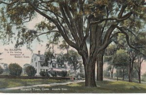 NORWICH , Connecticut , 1909 ; Historic Elms