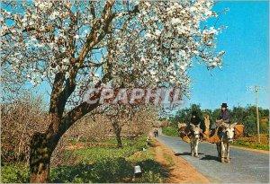 Postcard Modern Almonds in blossom Algarve Donkey Donkey