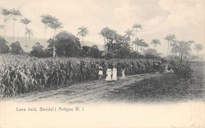 Sugar Cane Field People Buggy Bendal's Antigua West Indies  postcard