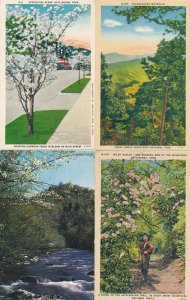 (4 cards) Dogwood & Mountain Views Great Smoky Mountains TN Tennessee (or N.C.)