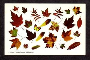 NH Autumn Leaf Tree Leaves of New Hampshire Postcard Stauber Carte Postale